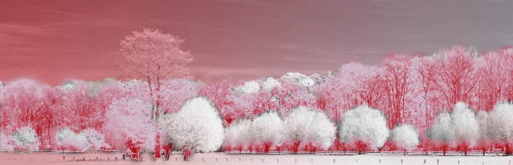 Artodem – Digitale Bilderwelten –